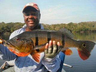 blog-Sept-23-2014-2-flyfishing-for-peacock-bass