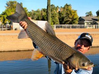 blog-Sept-23-2014-3-jeff-currier-flyfishing-for-grass-carp