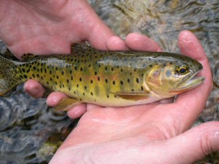 blog-Sept-7-2014-5-cutthroat-trout