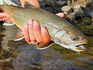 blog-Sept-9-2014-3-flyfishing-for-brook-trout