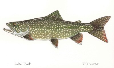 blog-Oct-10-2014-5-lake-trout-art