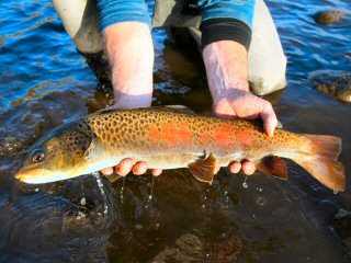 blog-Oct-14-2014-3-flyfishing-in-mongolia