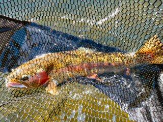 blog-Oct-24-2014-6-flyfishing-wedding-of-the-waters