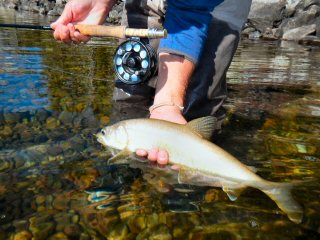 blog-Oct-8-2014-5-lake-trout-fishing