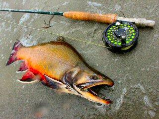blog-Sept-29-2014-5-flyfishing-for-brooktrout