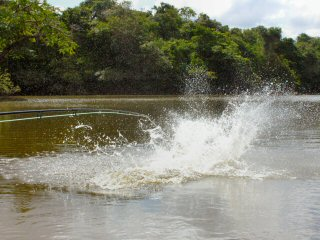 blog-Nov-4-2014-9-flyfishing-for-arapaima