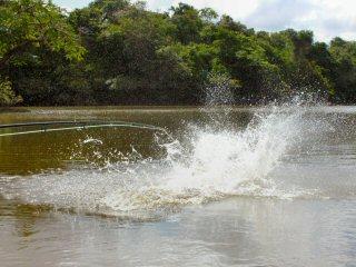 blog-Nov-4-2014-9-flyfishing-for-arapaima