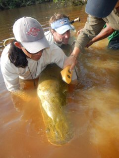 blog-Nov-5-2014-4-dr-lesley-de-souza-researching-arapaima