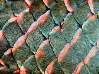 blog-Nov-7-2014-1-flyfishing-for-arapaima