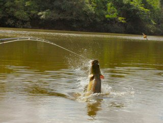 blog-Nov-8-2014-14-arapaima-on-the-fly