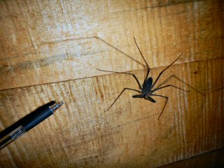 blog-Nov-8-2014-16-whip-spider