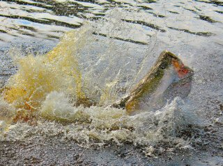 blog-Nov-8-2014-2-flyfishing-in-guyana