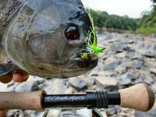 blog-Nov-8-2014-5-flyfishing-for-piranha