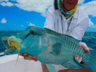 blog-Dec-11-2014-15-napoleon-wrasse