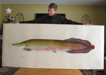blog-Dec-29-2014-1-jeff-currier-fish-artwork-arapaima