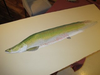 blog-Dec-29-2014-4-arapaima-art