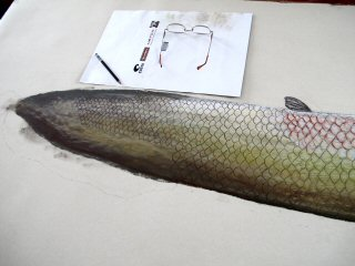 blog-Dec-29-2014-5-arapaima-artowrk