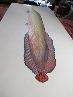 blog-Dec-29-2014-7-jeff-currier-arapaima-artwork