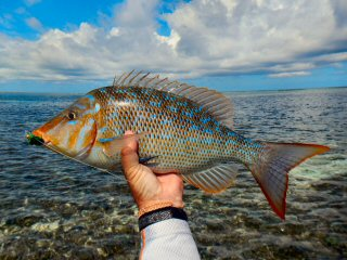 blog-Dec-4-2014-8-blue-spangled-emperor-fish