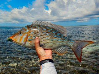 blog-Dec-4-2014-8-blue-spangled-emperor-fish