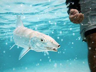 blog-Dec-5-2014-14-jim-klug-photo-seychelles-bonefish