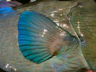 blog-Dec-5-2014-5-flyfishing-for-bumpheads