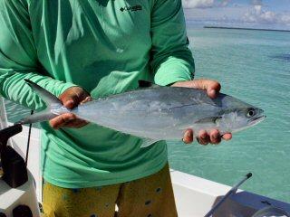 blog-Dec-6-2014-10-needlescaled-queenfish
