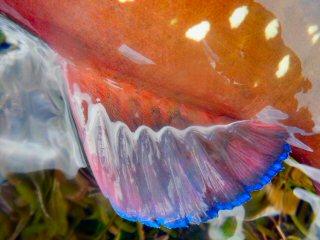 blog-Dec-6-2014-8-brown-african-marbled-grouper