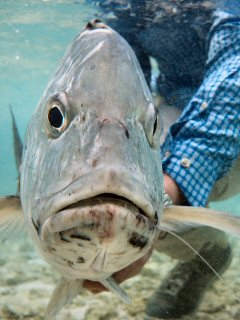 blog-Dec-7-2014-12-seychelles-giant-trevally-fishing