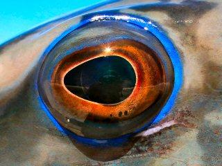 blog-Dec-7-2014-6-flue-african-marbled-grouper