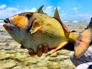 blog-Dec-8-2014-8-giant-triggerfish-in-the-seychelles