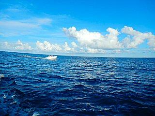 blog-Dec-9-2014-13-flyfishing-for-dogtooth-tuna