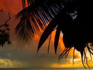 blog-Dec-9-2014-23-flyfishing-at-farquhar-seychelles