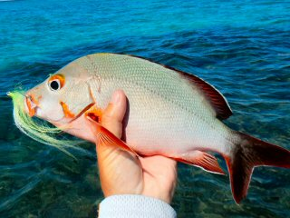 blog-Dec-9-2014-7-bone-snapper