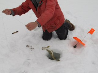 blog-Feb-8-2015-3-ice-fishing-for-pike