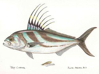 blog-March-18-2015-2-jeffcurrier-roosterfish-art