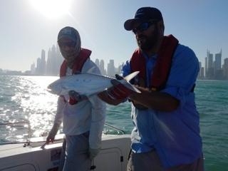 blog-April-4-2015-7-needlescale-queenfish