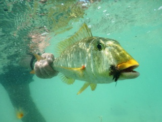 blog-April-10-2015-7-flyfishing-for-sweetlips