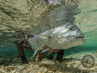 blog-April-13-2015-14-flyfishing-giant-trevally