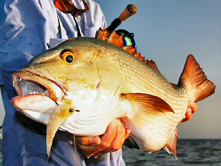 blog-April-13-2015-17-flyfishing-for-snapper