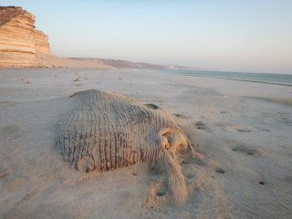 blog-April-17-2015-13-dead-whale-on-beach