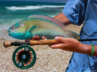 blog-April-20-2015-5-flyfishing-for-parrotfish