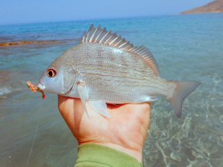 blog-April-21-2015-10-flyfishing-for-bream-in-oman