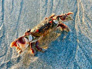 blog-April-23-2015-1-flyfishing-in-oman