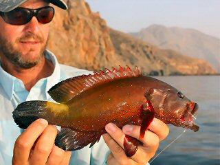 blog-April-28-2015-8-halfspotted-grouper