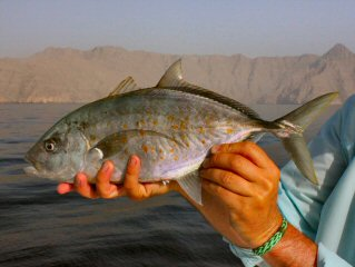 blog-April-29-2015-10-orangspot-trevally