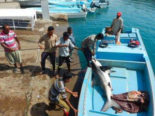 blog-April-29-2015-11-fishing-for-sharks
