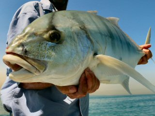 blog-May-2-2015-12-golden-trevally