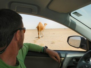 blog-May-3-2015-1-camel-crossing-in-oman