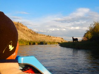 blog-July-14-&-15-2015-2-moose